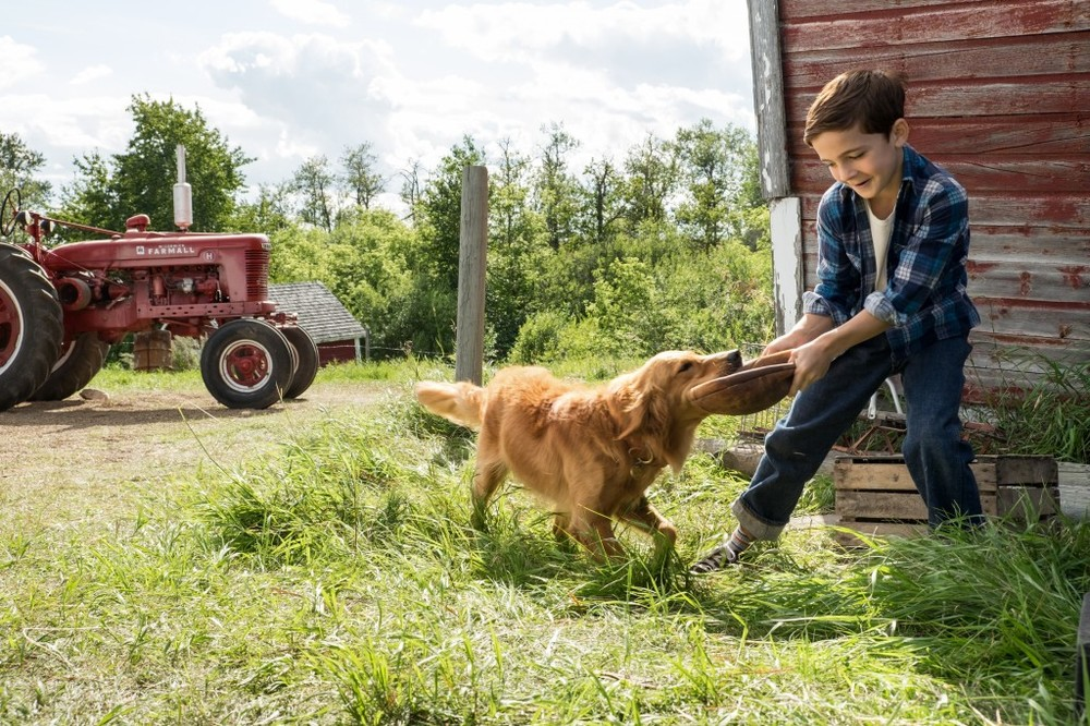 Qua la zampa!: Bryce Gheisar gioca con il suo cane in una scena del film