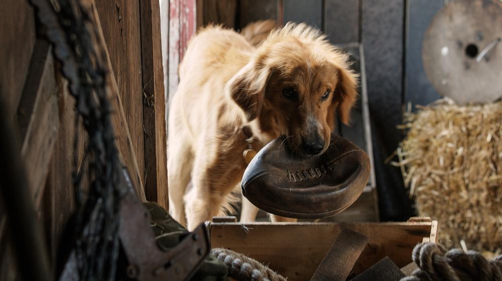 Qua la zampa!: un'immagine tratta dal film