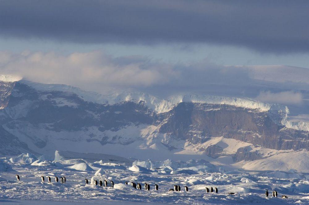 La marcia dei pinguini - Il richiamo: una bella immagine del documentario di Jacquet