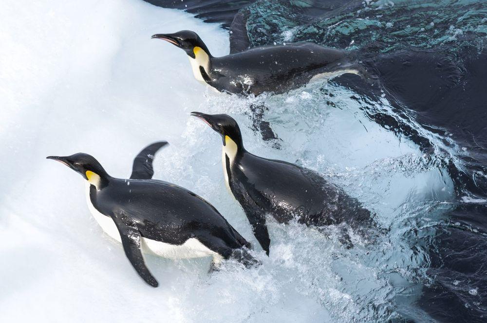 La marcia dei pinguini - Il richiamo: una suggestiva immagine del documentario