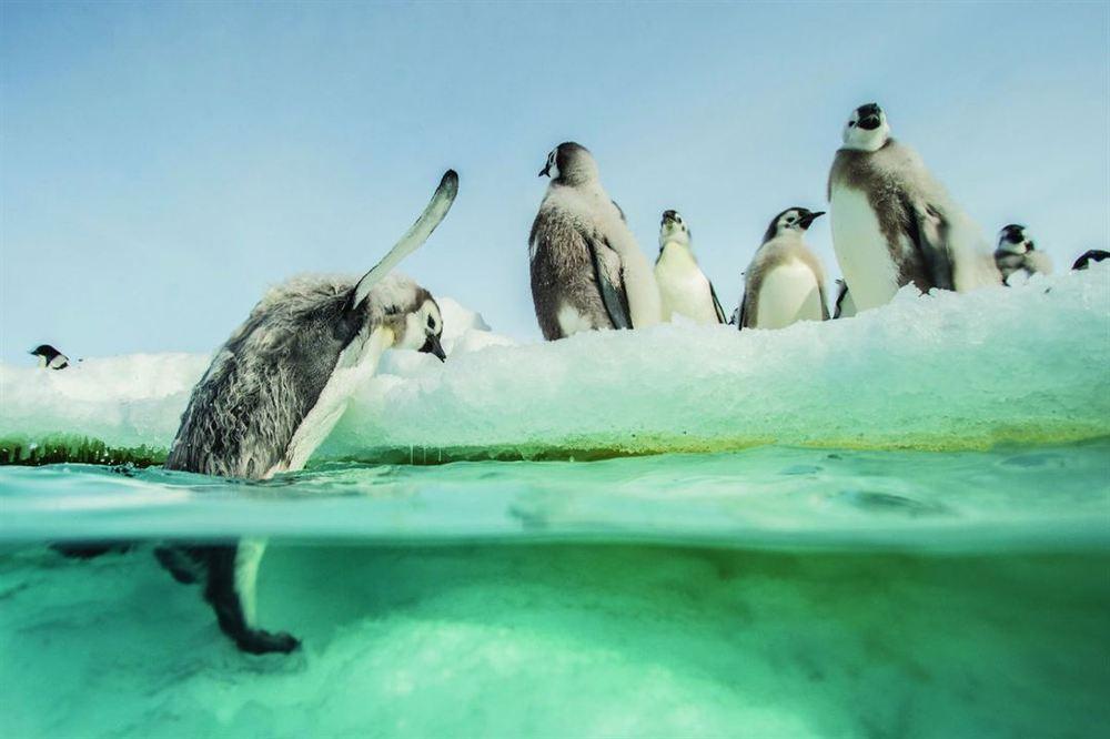 La marcia dei pinguini - Il richiamo: una suggestiva immagine del documentario di Jacquet
