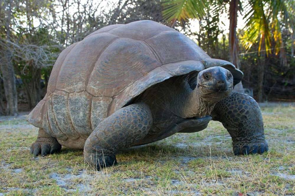 Aldabra - C'era una volta un'isola: una gigantesca tartaruga in una scena del documentario