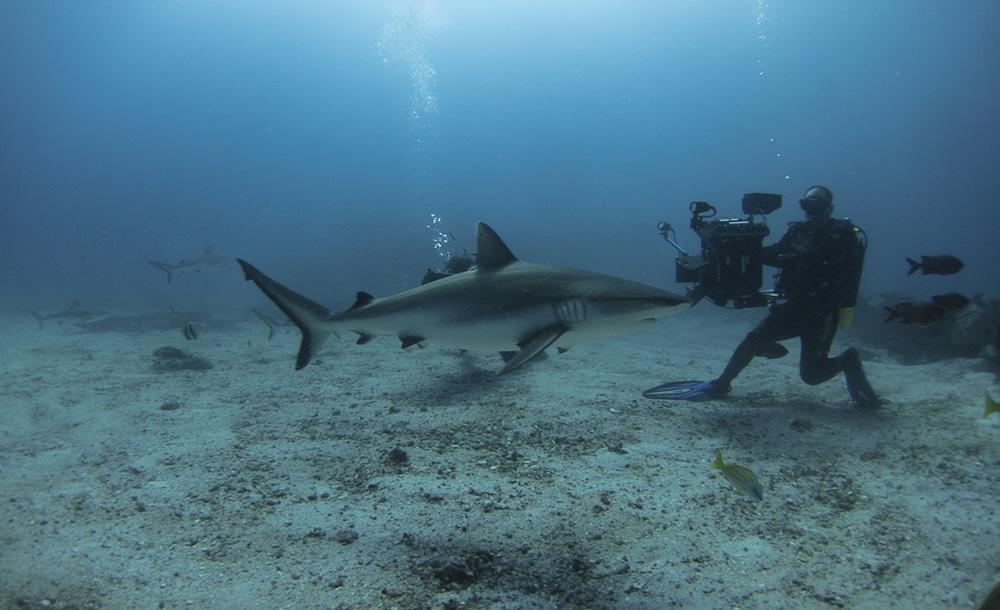 Aldabra - C'era una volta un'isola: un'immagine della realizzazione del documentario