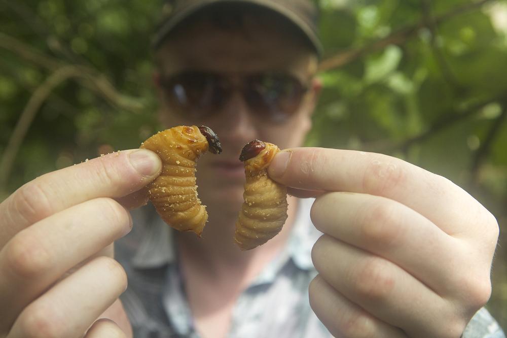 Bugs: una scena del documentario