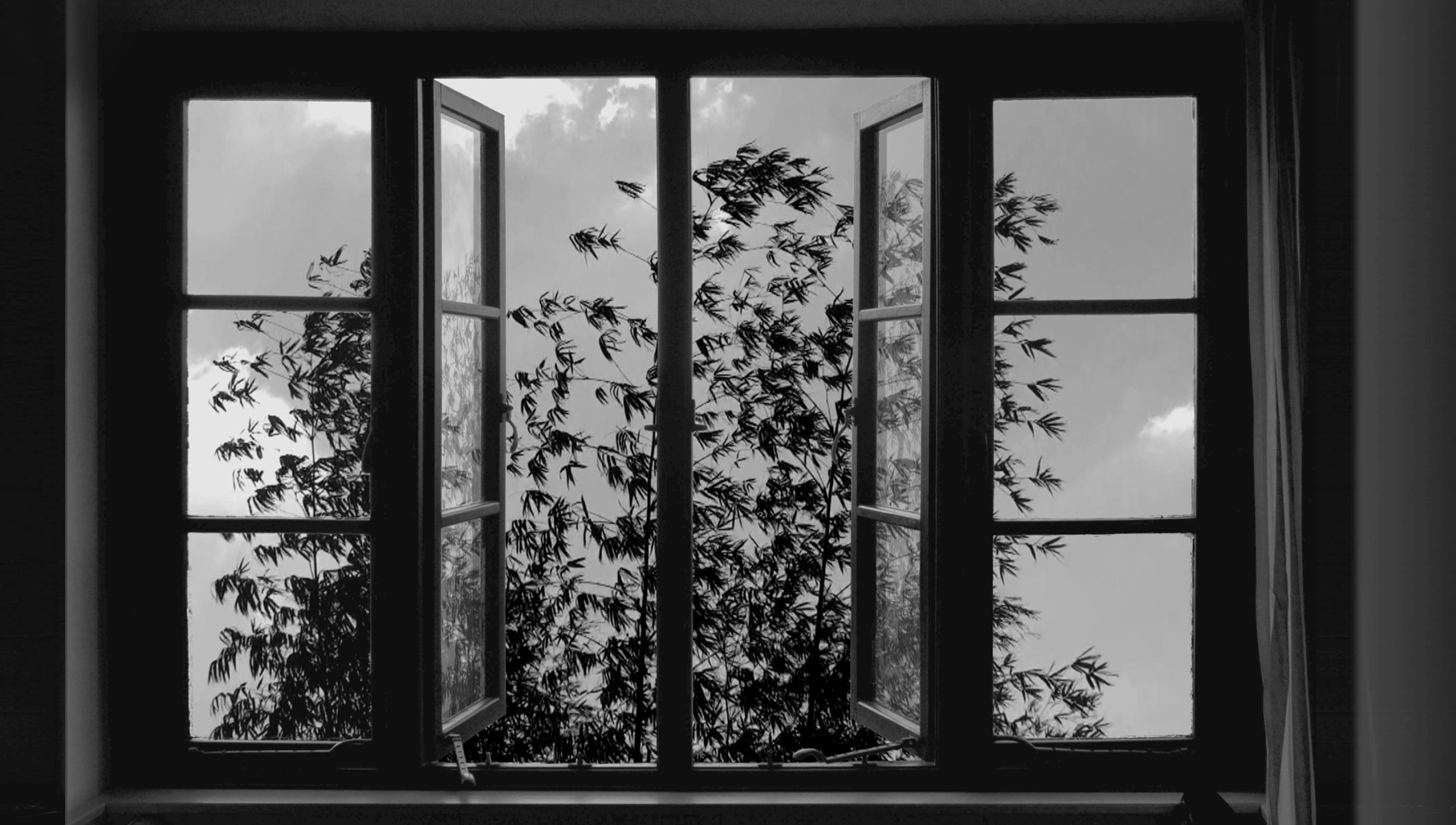 24 Frames: un'immagine del film