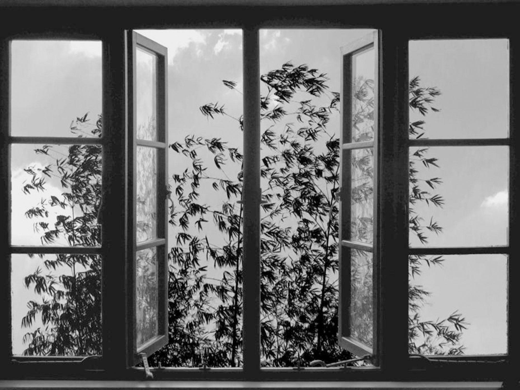 24 Frames - una scena del film di Kiarostami