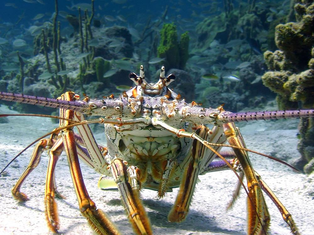 Le meraviglie del mare: un'immagine tratta dal documentario