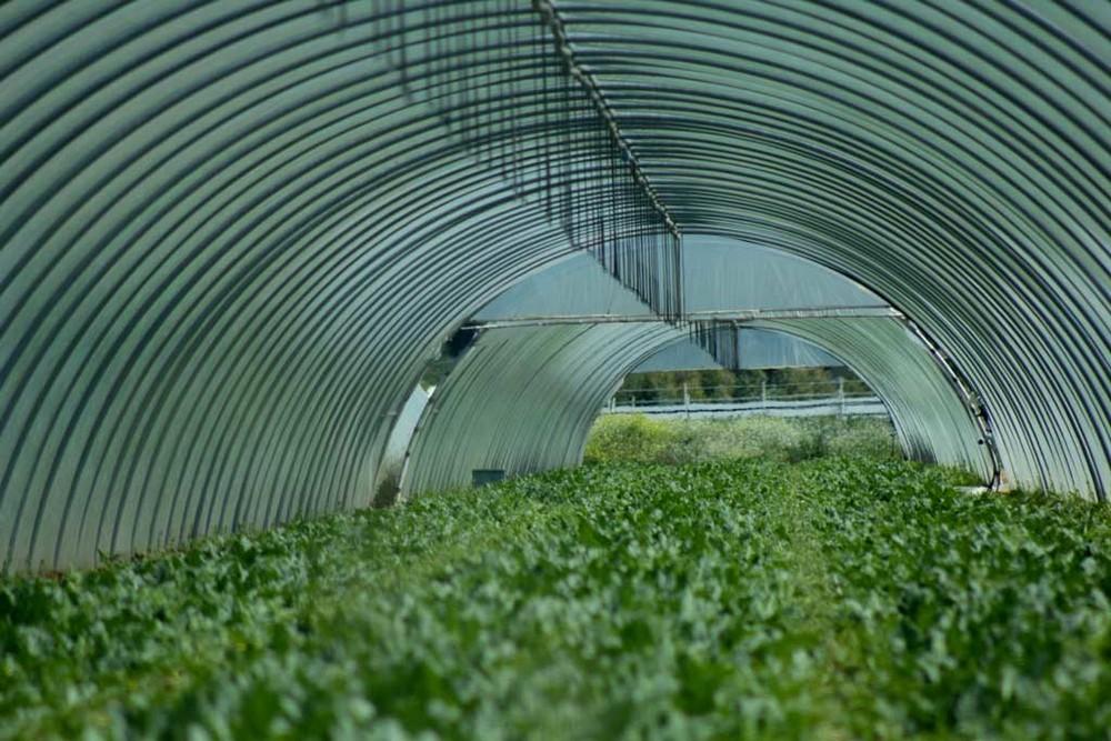 The Harvest: un'immagine del documentario di Andrea Paco Mariani
