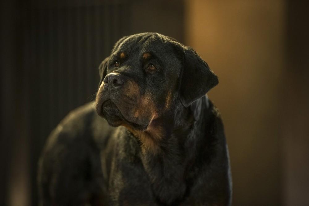 Show Dogs - Entriamo in scena: un'immagine tratta dal film