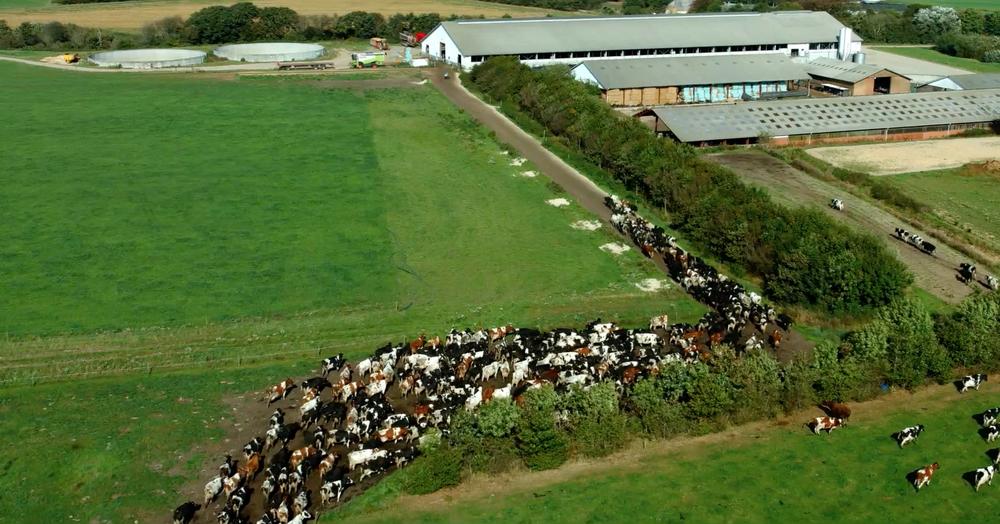The Milk System: un momento del documentario