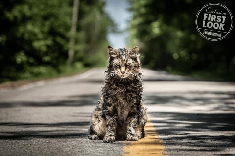 Pet Sematary: una foto del gatto Church