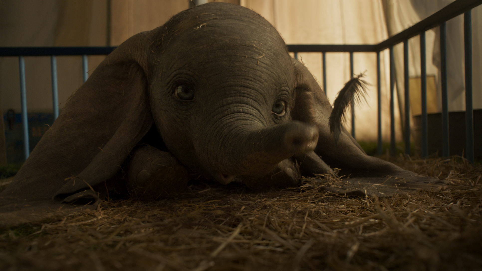 Dumbo: il piccolo Dumbo in una scena del film