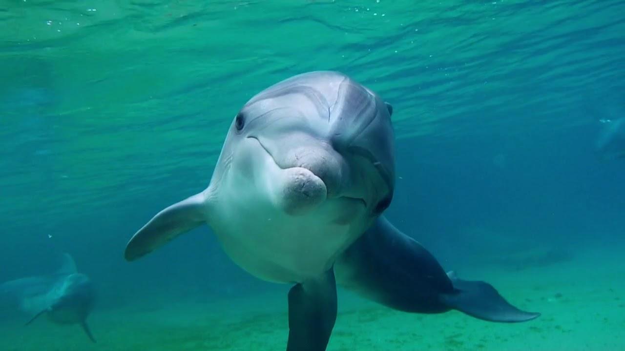 L'uomo delfino: una scena del documentario