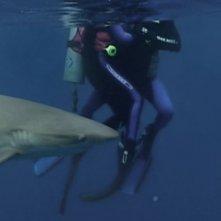 Una scena del film Open Water (2003)