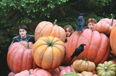 Il trio si nasconde nell'insolito orto di Hagrid