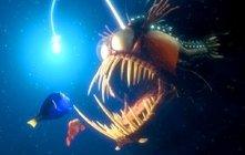 Una scena di Alla ricerca di Nemo (Finding Nemo)