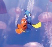 I due deliziosi protagonisti di Alla ricerca di Nemo