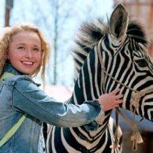 Hayden Panettiere in una scena di Striscia, una zebra alla riscossa