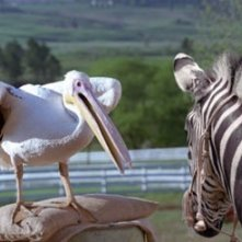 Una scena di Striscia, una zebra alla riscossa