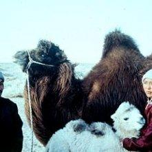 """Ikhbayar Amgaabazar e Odgerel Ayusch in una scena de """"La storia del cammello.."""""""