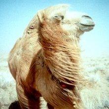 Il protagonista de 'La storia del cammello che piange