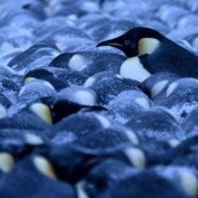Una scena del film La marcia dei pinguini