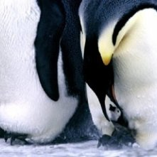 Scena del film La marcia dei pinguini
