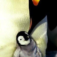 Una dolce sequenza del film La marcia dei pinguini