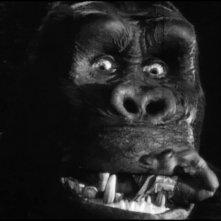 Un primo piano del colossale protagonista di King Kong