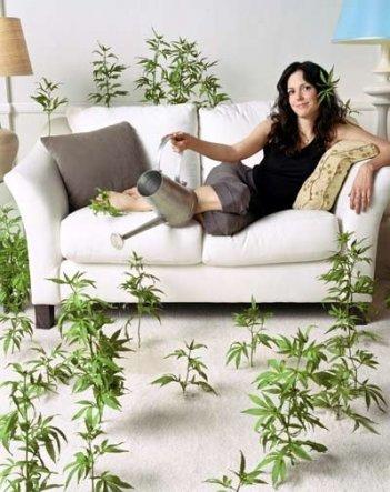 La locandina di Weeds