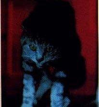 Una scena de L'occhio del gatto