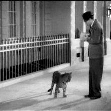 Cary Grant e il leopardo Baby in una scena di SUSANNA