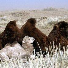 Una scena de il cane giallo della mongolia
