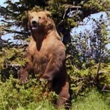 Una scena del documentario Grizzly Man (2005)