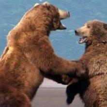 Una scena del documentario Grizzly Man