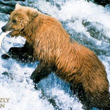 Un wallpaper del film Grizzly Man