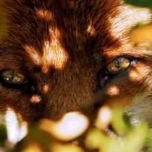 Un primissimo piano della protagonista de La volpe e la bambina