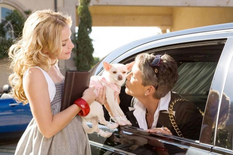 Piper Perabo Jamie Lee Curtis E Il Chihuahua In Una Scena Del Film Beverly Hills Chihuahua 79285