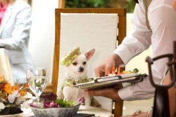 Una scena del film Beverly Hills Chihuahua