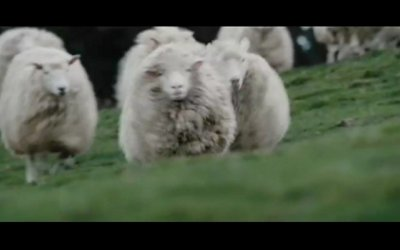 Black Sheep - Trailer