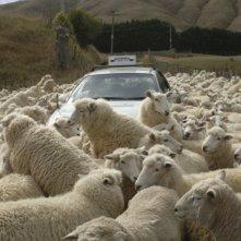 Il gregge di pecore di Black Sheep