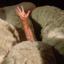 Un braccio spunta da un branco di pecore assassine in una scena di Black Sheep