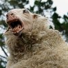 Pecore assassine al PesarHorrorFest