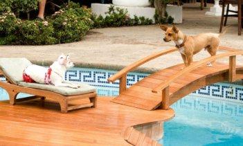 Una scena di Beverly Hills Chihuahua