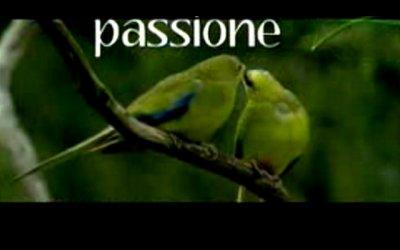 Animals in Love - Trailer italiano