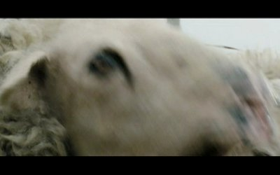 Black Sheep - Trailer Italiano