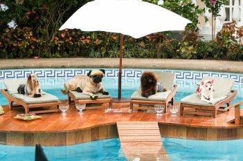 Un'immagine di Beverly Hills Chihuahua