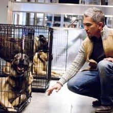 Cesar Millan partecipa all'episodio 'The Finger in the Nest' della quarta stagione di Bones