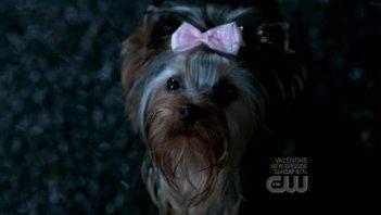Il cane 'infernale' che terrorizza Dean nell'episodio 'Yellow Fever' della serie Supernatural