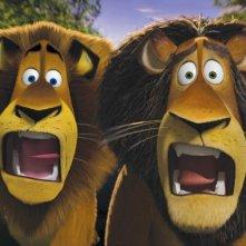 Alex e suo padre Zuba in un'immagine del film Madagascar 2